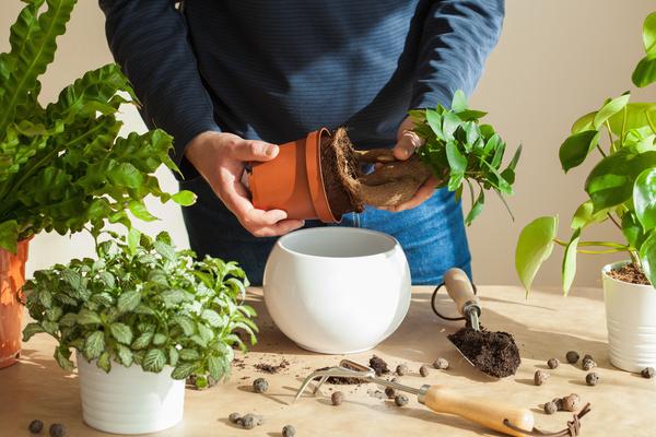 観葉植物を置いておうち時間を楽しもう!近所の花屋・園芸店を探せるサイトが誕生