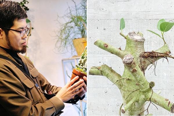 枯れかけた観葉植物を再生し「リボーンプランツ」として販売--老舗植物店RENに聞く、新しい発想の生み出し方