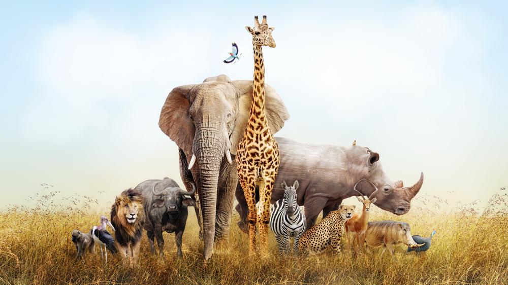 【33の動物例】自分を動物に例えると?就活面接での意図と答え方のポイントを紹介